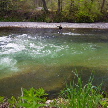 Fliegenfischen: Saisonbeginn an der Deutschen Traun